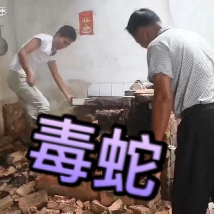 #农村大哥#拆厨房,意外发现一条#蛇#走近一看吓的后退三步,立马放生#我要上热门@美拍小助手#