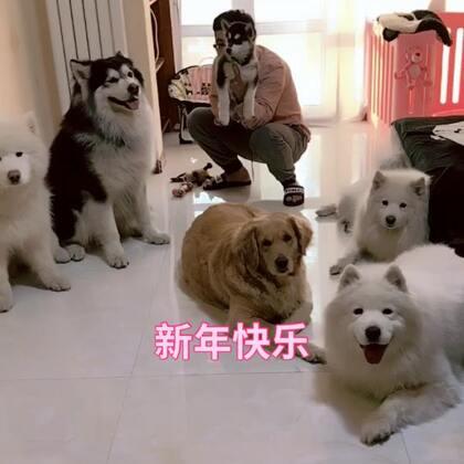 新年快乐~ 祝大家狗年旺旺旺 谢谢大家对我们一直的支持 嗯 一直在#宠物#
