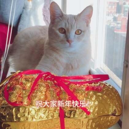 😸招财猫给大家拜年啦!祝大家新年快乐!万事顺意!招财进宝!#过年洗脑歌##宠物##萌宠拜年秀#