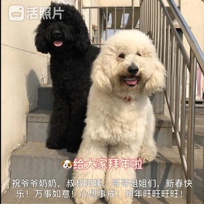 #宠物##宠物拜年秀##精选#@美拍小助手 @宠物频道官方账号