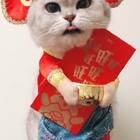 喵爸喵妈携慕斯法派和贝灵祝大家新年快乐啦!!!来年都要财源滚滚哈😝😝😝#宠物##新年快乐#