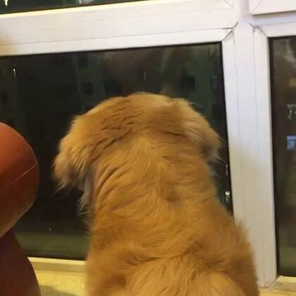 #宠物#看礼花喽🎆