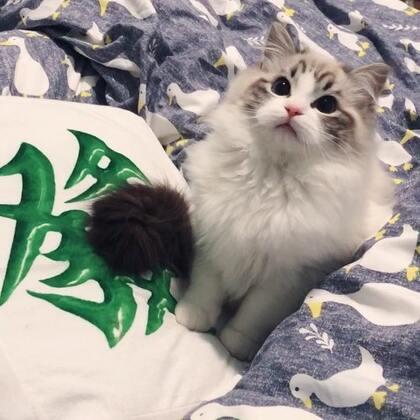 【Gu猫】点赞的小伙伴 2018 一路发发发