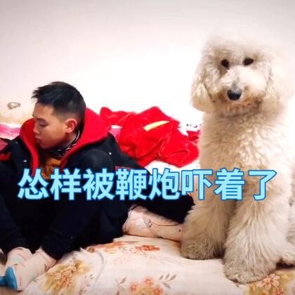 安小妹被鞭炮声吓得不动了😂#宠物##精选##宠物拜年秀#@宠物频道官方账号 @美拍小助手