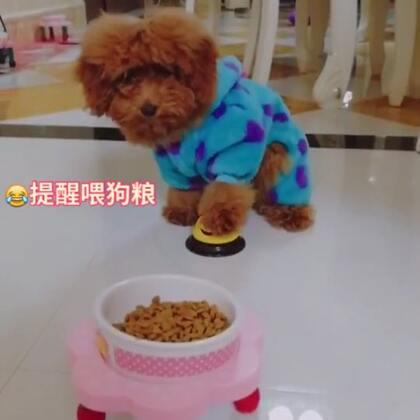 😍😍😍可不可爱#宠物##精选##汪星人#