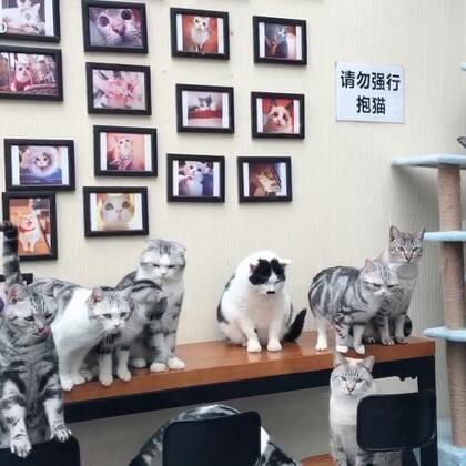 【Gu猫】新年第一天上班 娃儿些开心得很