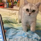 #宠物#Miu姐完全不能接受自己很丑🤣【其实我觉得这个人猫交流器没啥用 真的】