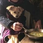 只有喂饭才吃的狗子!😂😂😂#搞笑##精选##宠物#