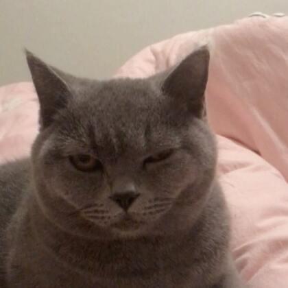 #宠物##精选##有戏# 你拽的过我家猫??