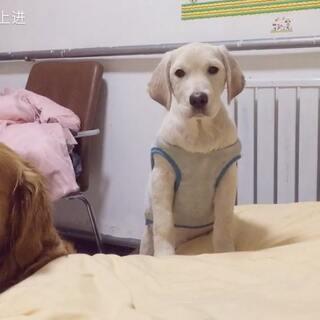 #宠物#俩只混日子的小朋友😂