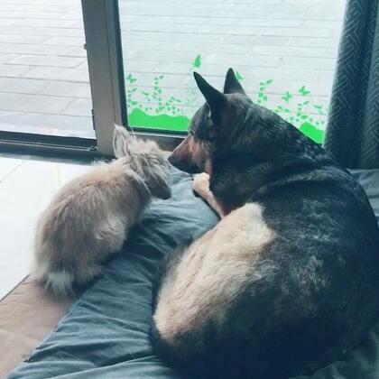 爱我你就亲亲我#宠物#