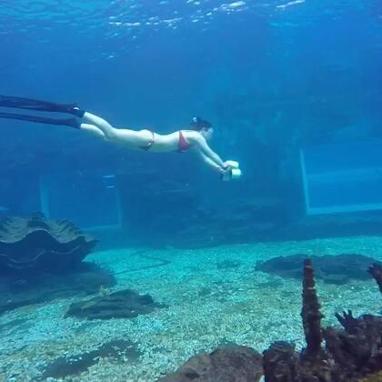 我想要你带着我遨游海底世界!在水里静静地欣赏不一样的风景!#自由潜##水下摄影##水下写真#
