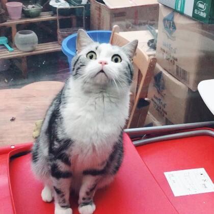 【Gu猫之小黑唇】你在看什么?