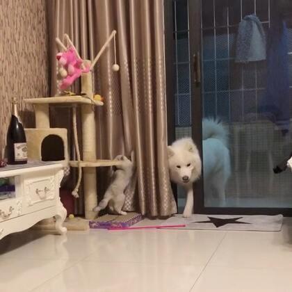 幹壞事了 麻麻不讓你進來老實待著#宠物##miumiu##小A#