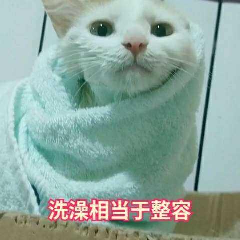 【百变小喵meico美可美拍】#多糖芒果冰##萌宠洗澡记##宠物#...