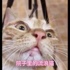 邻居家的院子跑来了一只流浪猫 嘴巴有炎症、耳朵脏、今天给她打扮了一下、今天有好心姐姐来接走收养了!从此以后不会再流浪了!#宠物# 今天初八 是我遇见第一只流浪宝贝 希望她幸福生活!@喵喵儿的店 @喵汪悟空