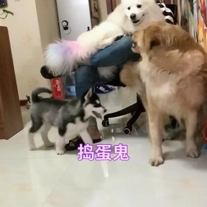 哈哈一群小可爱#宠物#