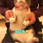 接下来🌞方家舞(zai)王(zai) 舞(miao)后(mei) 即兴给大家来个海草舞😍ི😍ི#宠物##海草舞##宠物手势舞#