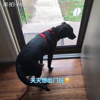 🇨🇳🇺🇸我的二婚美好生活🇺🇸🇨🇳老哈说:米妮需要朋友😱😂于是带上米妮办齐证件去狗狗公园💃🏻找狗友玩😁🤣#我要上热门##宠物##日志#@娜妈代购拼邮江西转寄