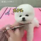 #宠物##旺星人##我要上热门@美拍小助手#