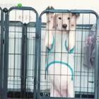 #宠物##bingbian病变##我要上热门#我想我离不开你了😂