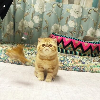 #加菲猫##加菲猫的幸福生活#美美要飞四川新家了✈️,照顾猫咪的我一直没有时间旅行,就让美美代我到成都的街头走一走……祝我的孩子平安幸福❤️