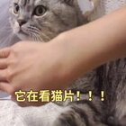 呆萌最爱看猫视频了,这聚精会神的小样子😂和你们看电视一样一样的吧🙃🙃