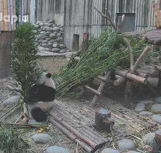 #萌团子日常#我就不明白这竹子有啥不一样的给你在那挑半天😂