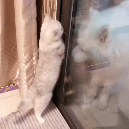 在打掃衛生的時候發現miu想救他們出來哈哈哈#宠物##miumiu的日常#