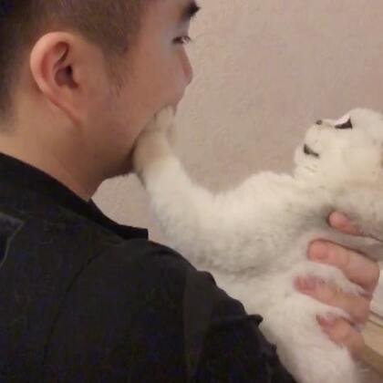 不許靠近~ #宠物##miumiu的日常#
