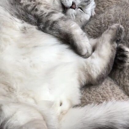 #精选##宠物#原谅我不厚道的笑了……😅🤣@猫侠的日常