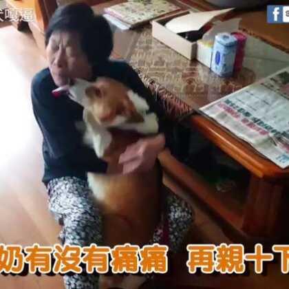 假日出任務,順便送民生用品給奶奶(奶奶完全招架不住啊)#寵物##柯基犬嘎逼##萌宠#