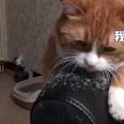 小咪:才几点啊,睡什么觉啦,快起来陪我玩嘛~~~ #搞笑##宠物##我要上热门#
