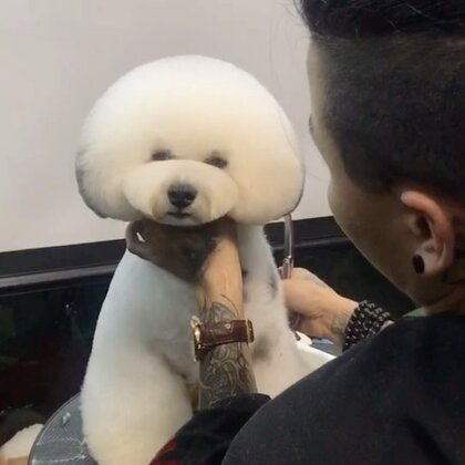 困到不行的杰克😄😄😄#宠物美容师的日常##宠物美容培训#