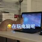 😂在玩电脑的74~~#宠物##抱宠物旋转大赛##锤子舞#