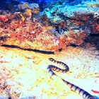 海蛇好毒,不敢把头放取景器哦