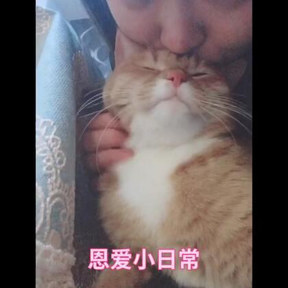 分享一波恩爱小日常~粘人的橘猫艾露,我的小心肝小宝贝儿~讲真,不是我吸猫,是猫吸我啊!#喵星人##日常吸猫##猫咪#