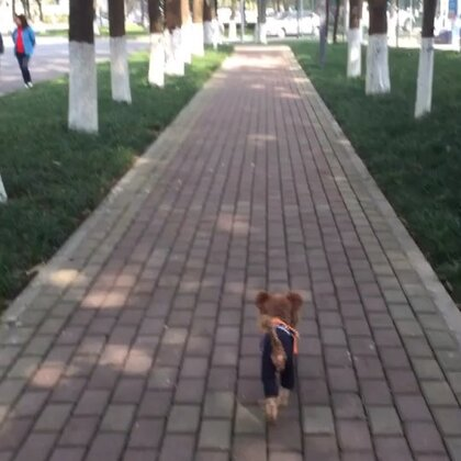 #宠物#✨小石头✨你在前面跑啊跑🐾🐾我在后面追呀追👣👣这就是我们每天简单而快乐的生活💖💫💖💫💖#宁静的校园,宁静的❤️,💋#