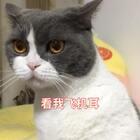 😂神神经经的歌 神神叨叨的猫😄😄#精选##宠物##跟拍上热门#