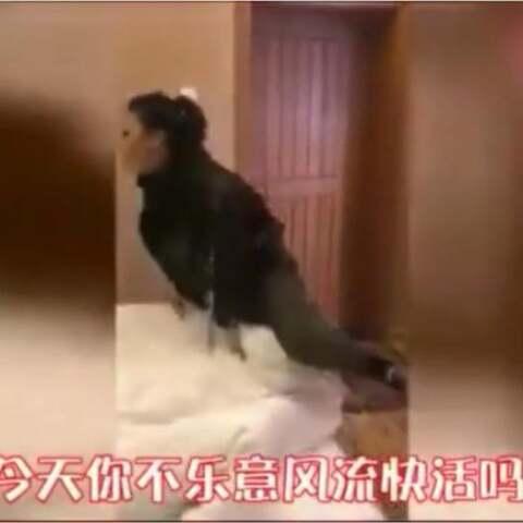 【全球搞笑精选美拍】不得不说东北妹子就是霸气! 替...