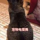 这突如其来的一波电(sao)摆(cao)舞(zuo)😂#精选##宠物##电摆舞#