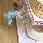 #宠物#十七刚回来的那几天仔仔每天都是这个状态,和兔子一样耳朵都竖起来了😄