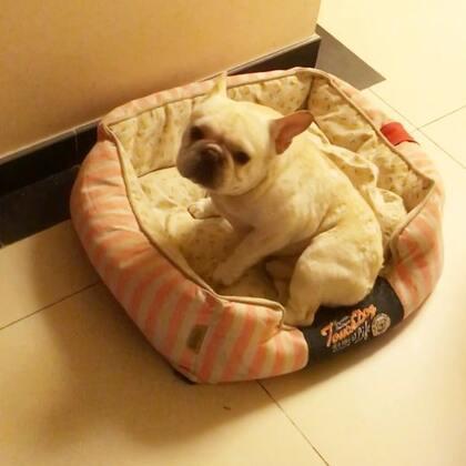 #宠物##来福和多吉##我要上热门@美拍小助手#@宠物频道官方账号