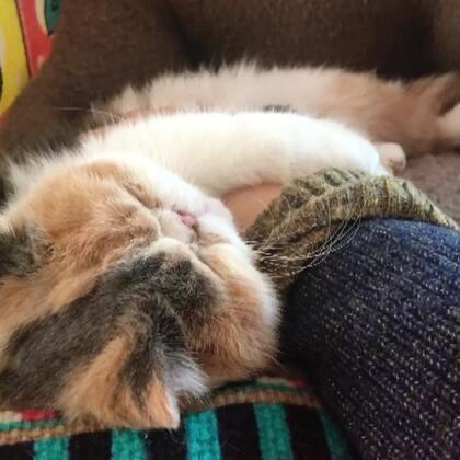 #加菲猫##加菲猫的幸福生活#❤
