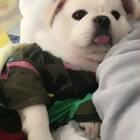 早安❤️ #宠物#(土豆麻自制宠物零食)http://shop.m.taobao.com/shop/shop_index.htm?spm=0.0.0.0&shop_id=117933639