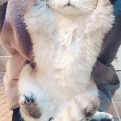 你们要看的慕斯比心😂多比两个 也比不像❤️#宠物#