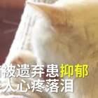 【3岁猫咪被遗弃后患抑郁,瘦骨如柴还舔伤自己,救助人心疼哭💔】小白是只3岁公猫,它被主人遗弃后,就患了抑郁症,黏人,怕其他猫欺负,甚至舔伤了自己,从10几斤瘦到只有5、6斤。救助人提到它时心疼落泪。任何遗弃虐待动物的行为,都应当为社会所不齿,有能力让它们走进你的世界,就要善待它们!