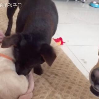 #宠物#养狗狗的幸福?不养的不知道