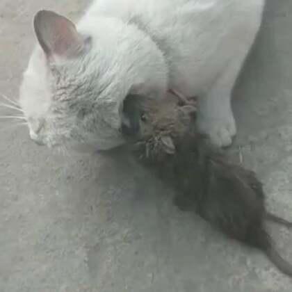 猫猫还手啊😂