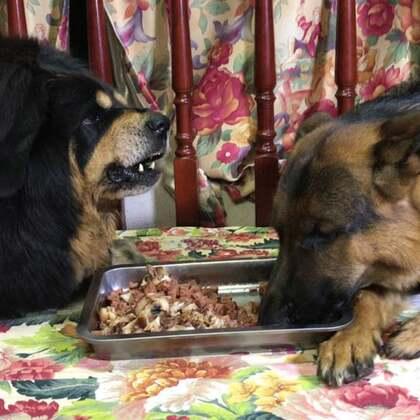 #汪星人##我要上热门@美拍小助手##宠物#每天吃饭就像打仗、不吵架根本吃不进去。不过怎么说呢?都是辛巴惹得祸!